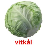 vitkål picture flashcards