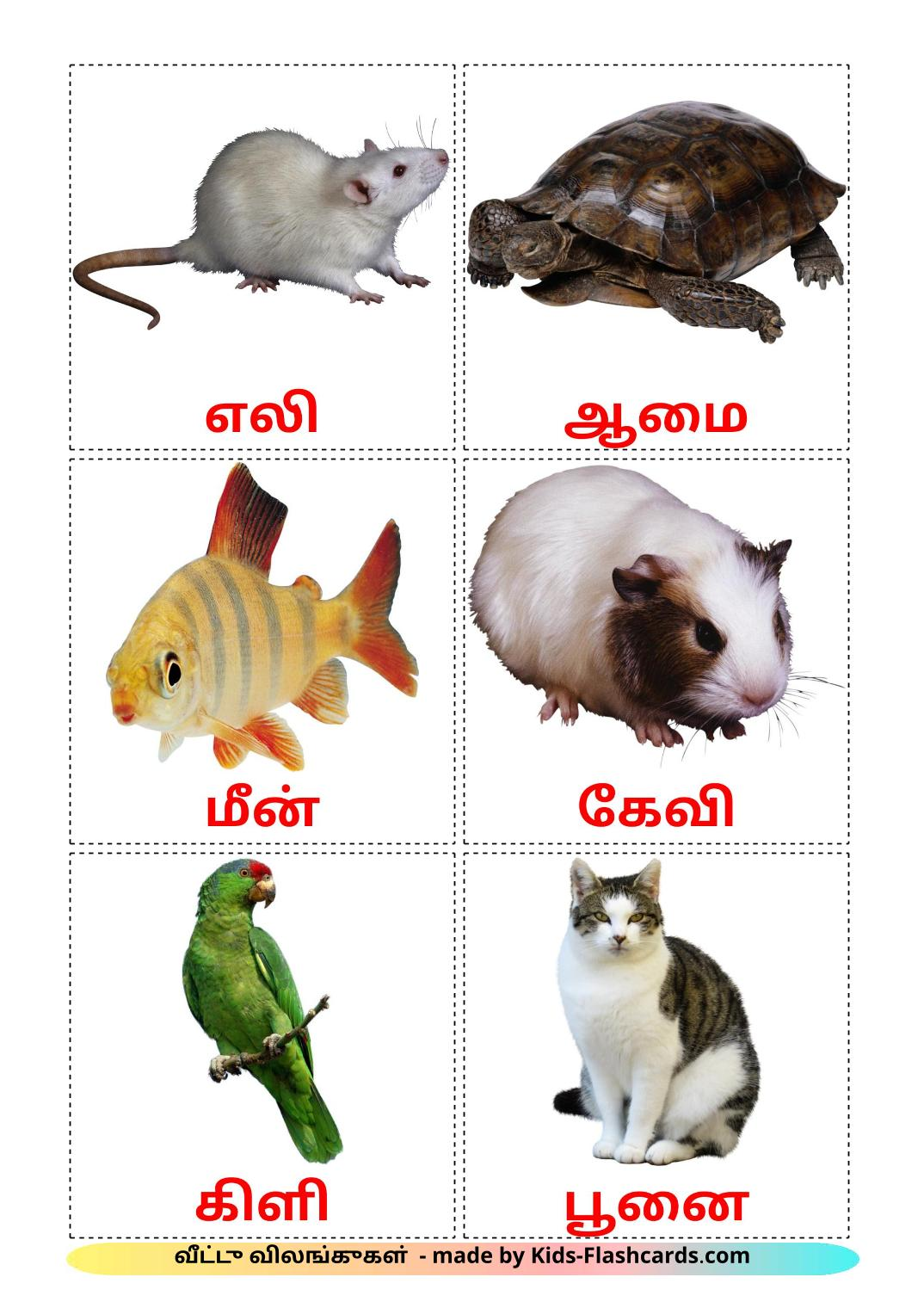 Domestic animals - 10 Free Printable tamil Flashcards