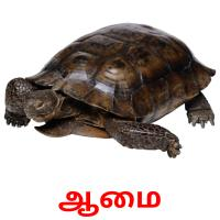 ஆமை picture flashcards