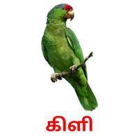 கிளி picture flashcards