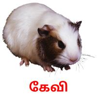 கேவி picture flashcards