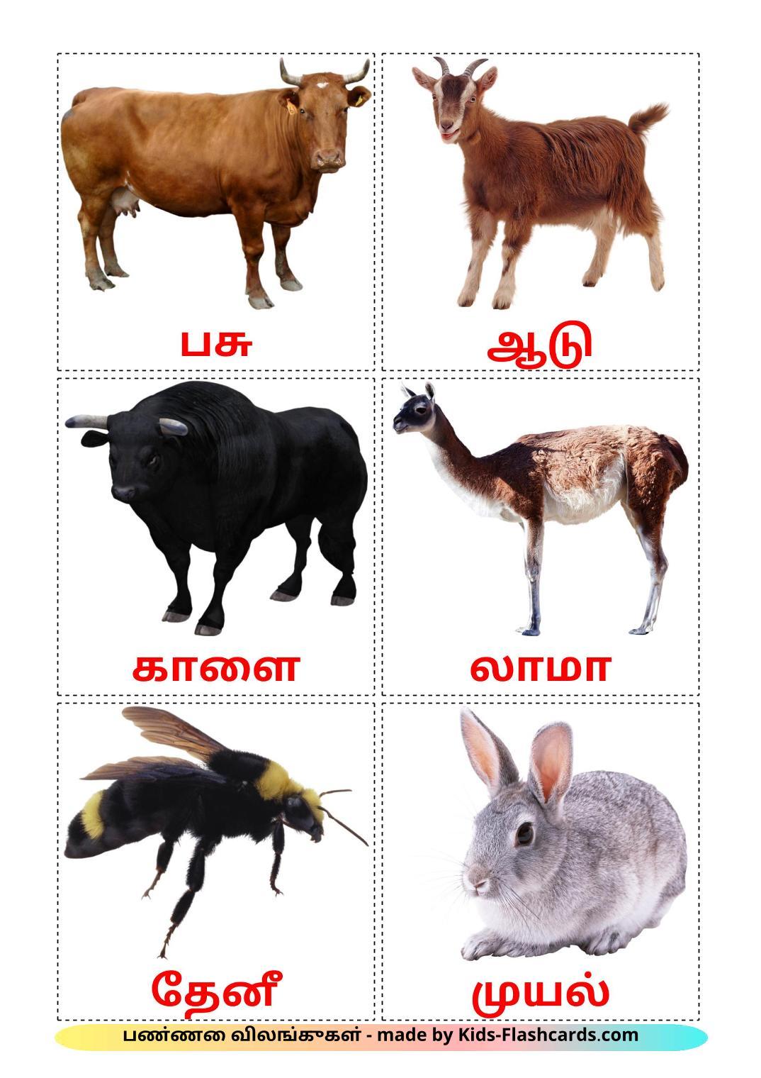 Farm animals - 15 Free Printable tamil Flashcards