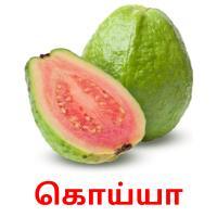 கொய்யா picture flashcards