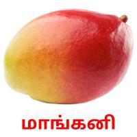 மாங்கனி picture flashcards