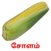 சோளம் picture flashcards