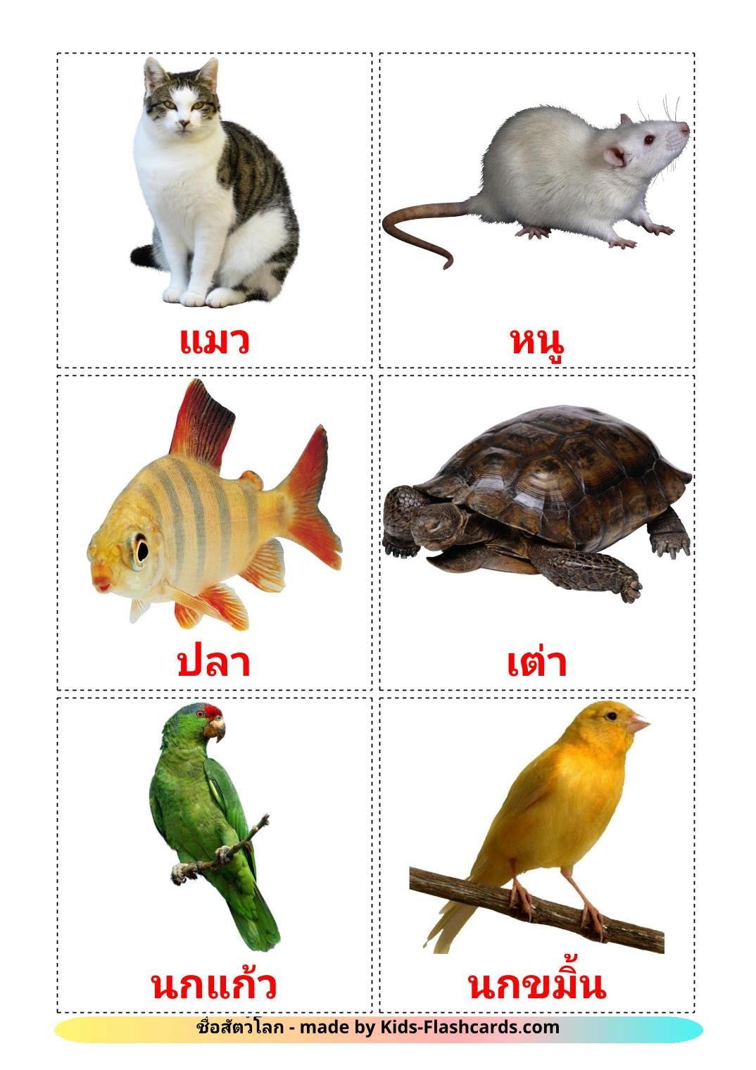 Domestic animals - 10 Free Printable thai Flashcards