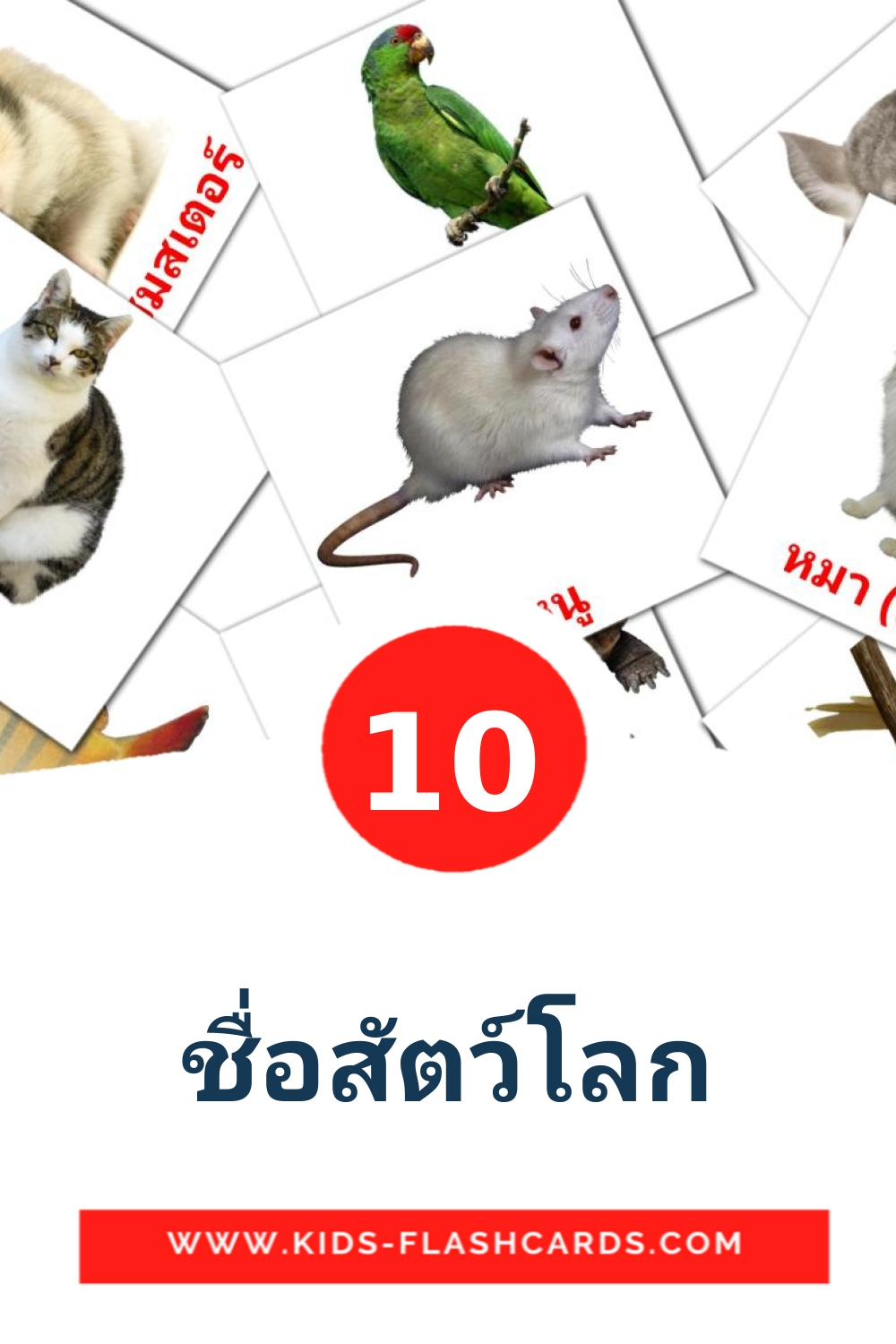 10 ชื่อสัตว์โลก Picture Cards for Kindergarden in thai