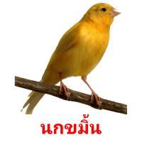 นกขมิ้น picture flashcards