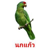 นกแก้ว picture flashcards