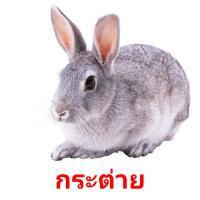 กระต่าย picture flashcards