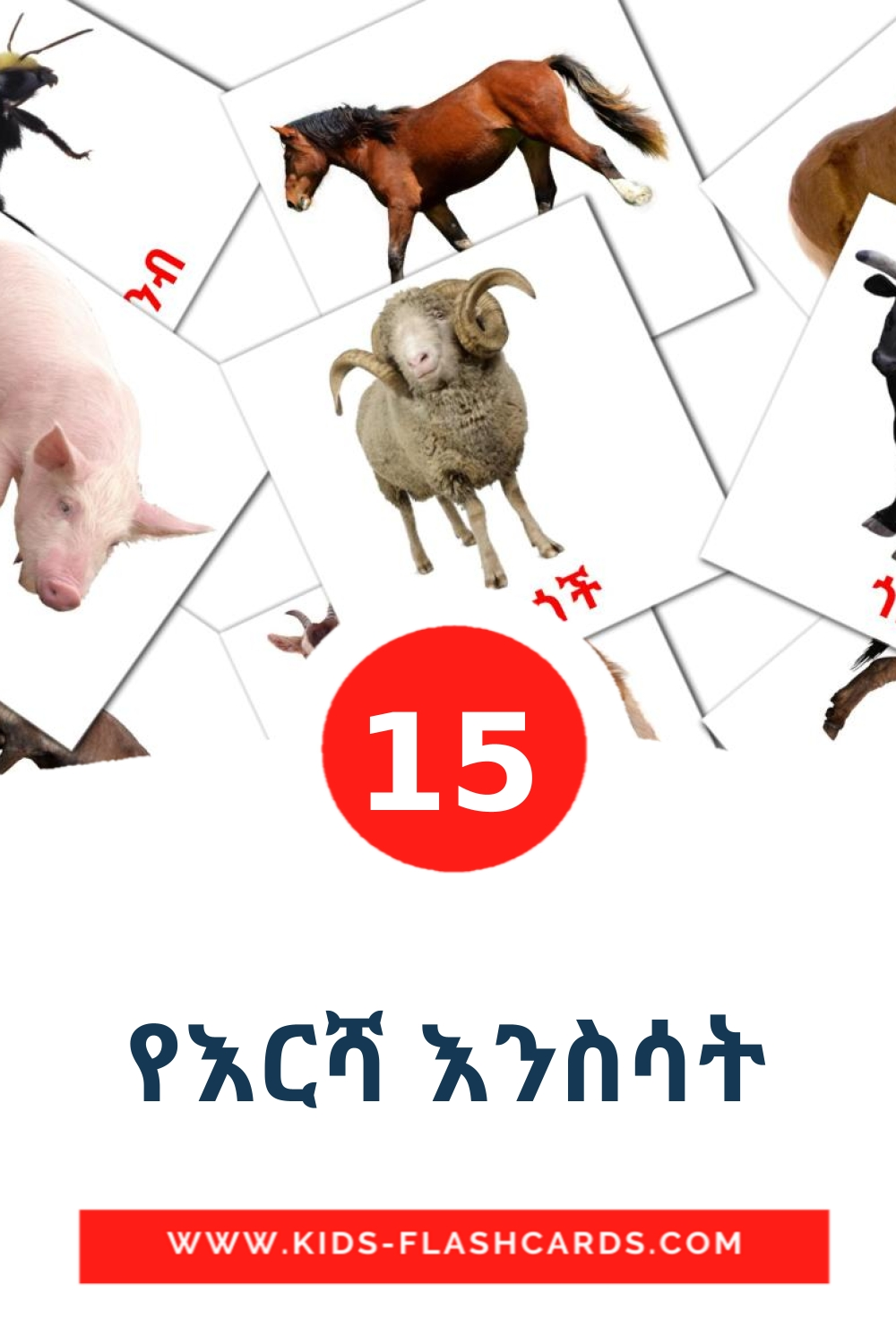 15 የእርሻ እንስሳት Picture Cards for Kindergarden in tigrigna