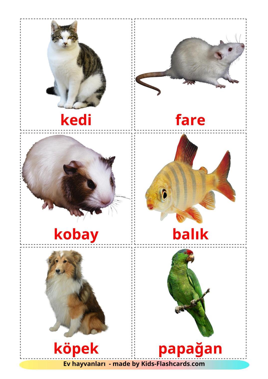 Domestic animals - 10 Free Printable turkish Flashcards