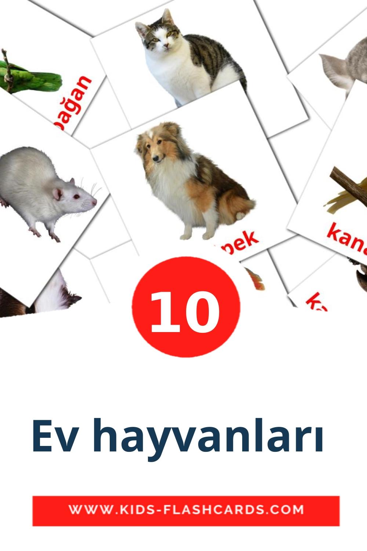 10 Ev hayvanları  Picture Cards for Kindergarden in turkish