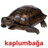 kaplumbağa picture flashcards