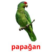 papağan picture flashcards