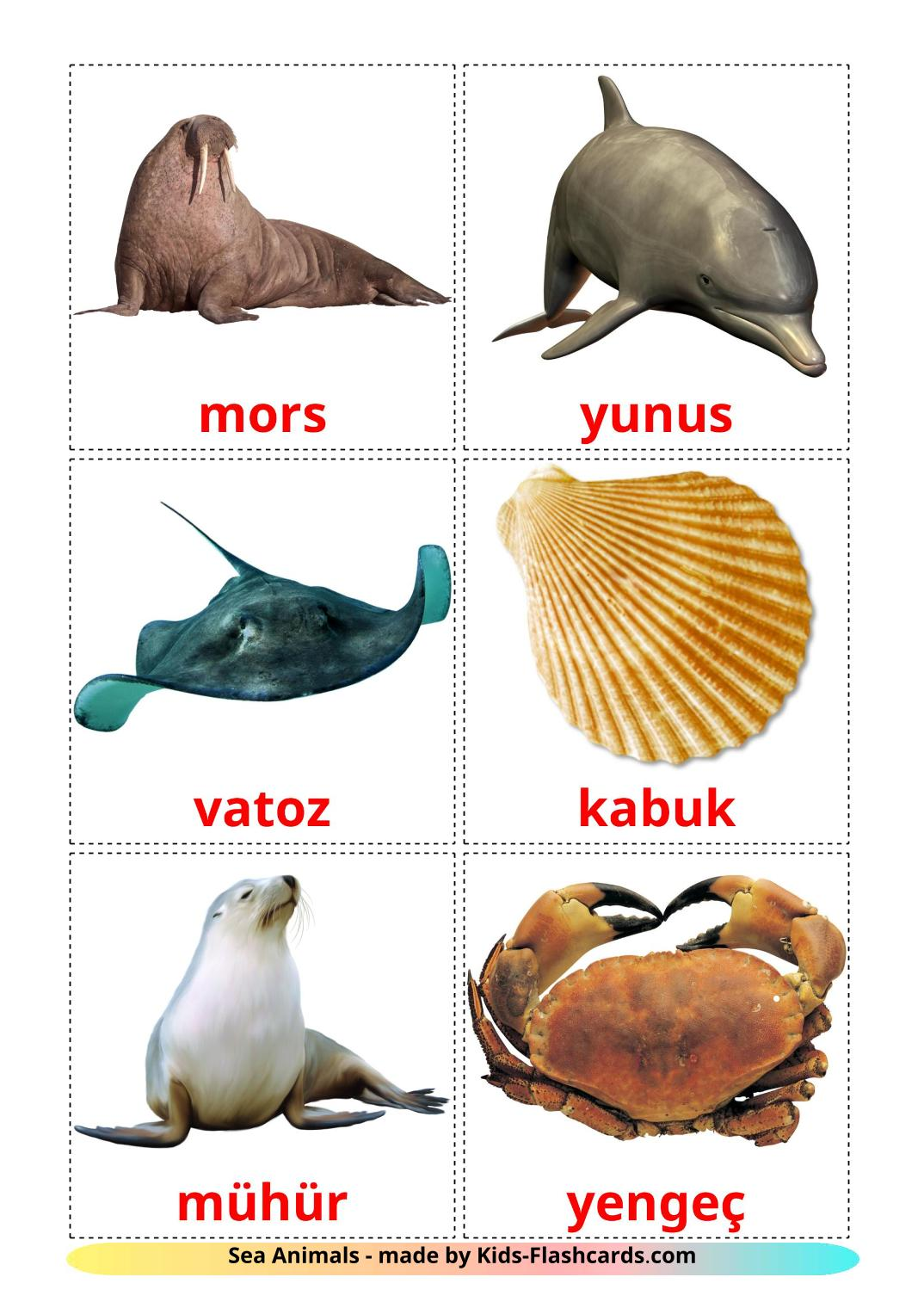 Sea animals - 29 Free Printable turkish Flashcards