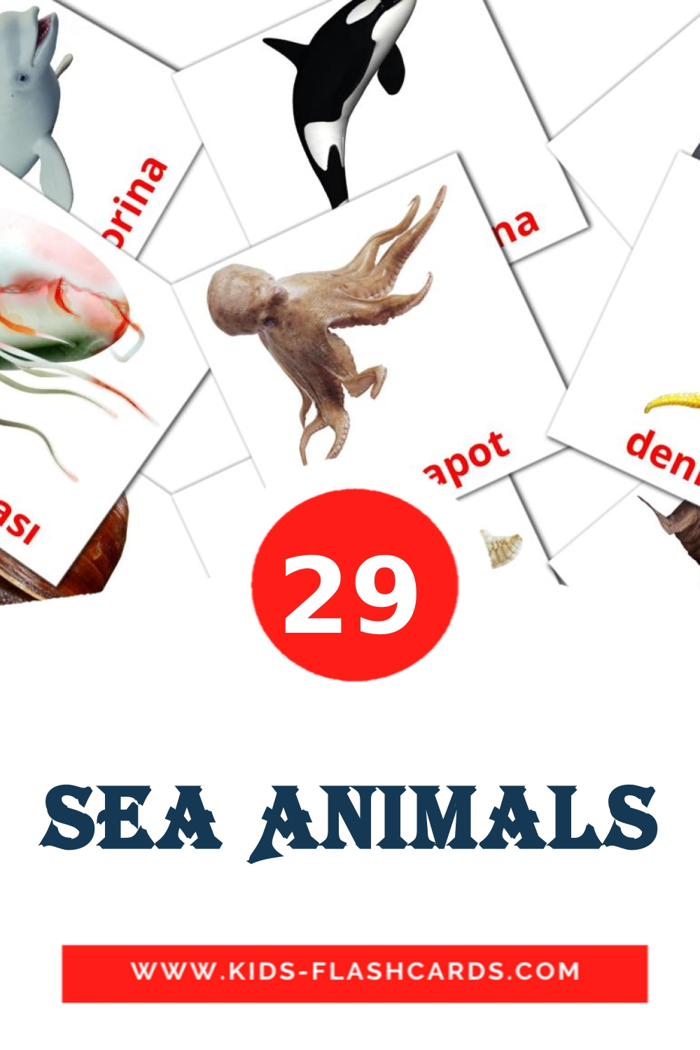 29 Sea Animals Picture Cards for Kindergarden in turkish