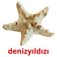 denizyıldızı picture flashcards