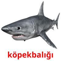 köpekbalığı picture flashcards