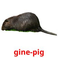 gine-pig picture flashcards