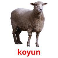 koyun picture flashcards