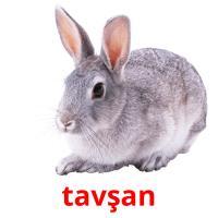 tavşan picture flashcards