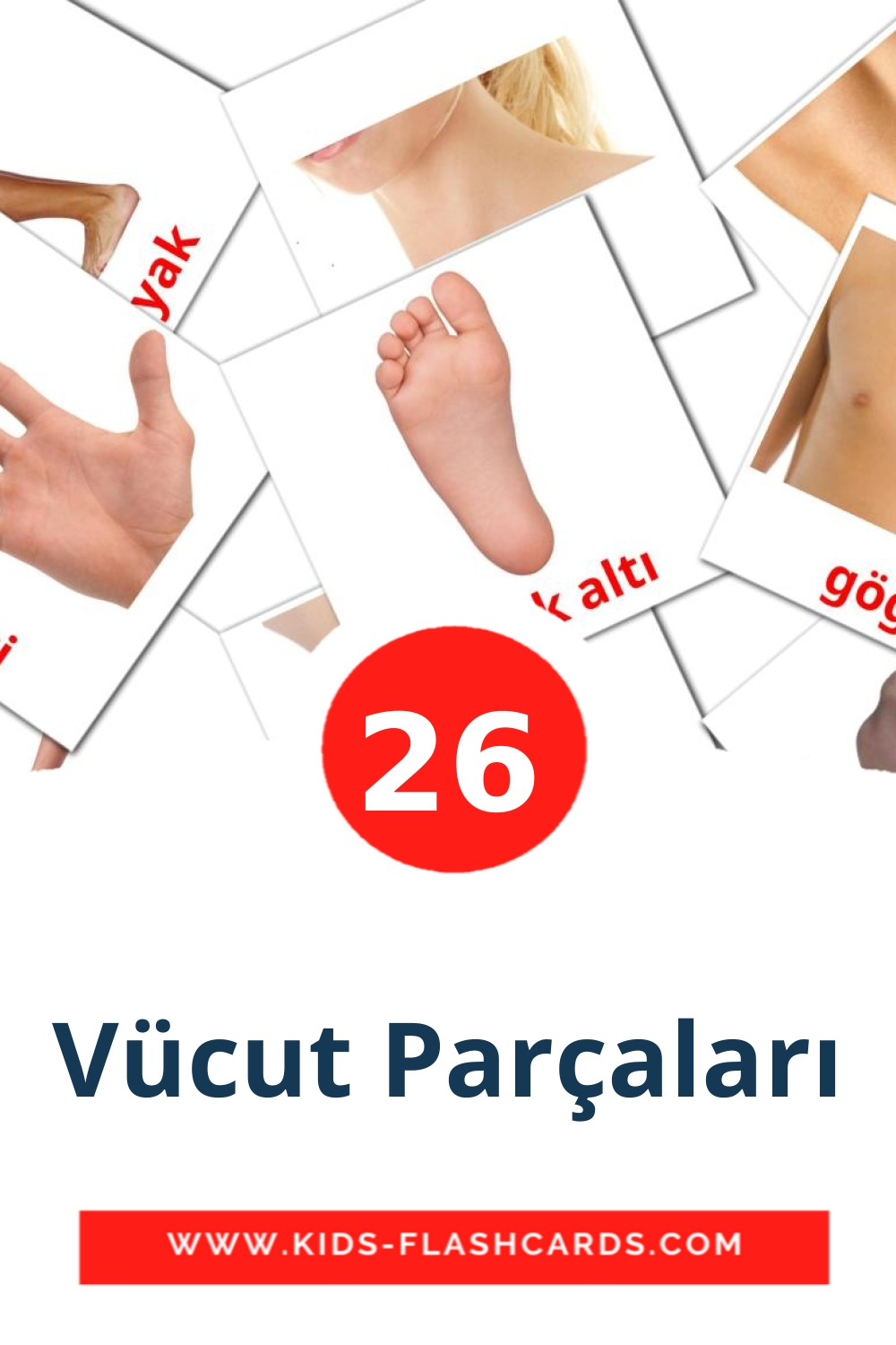 26 Vücut Parçaları Picture Cards for Kindergarden in turkish