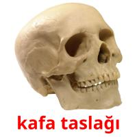 kafa taslağı picture flashcards