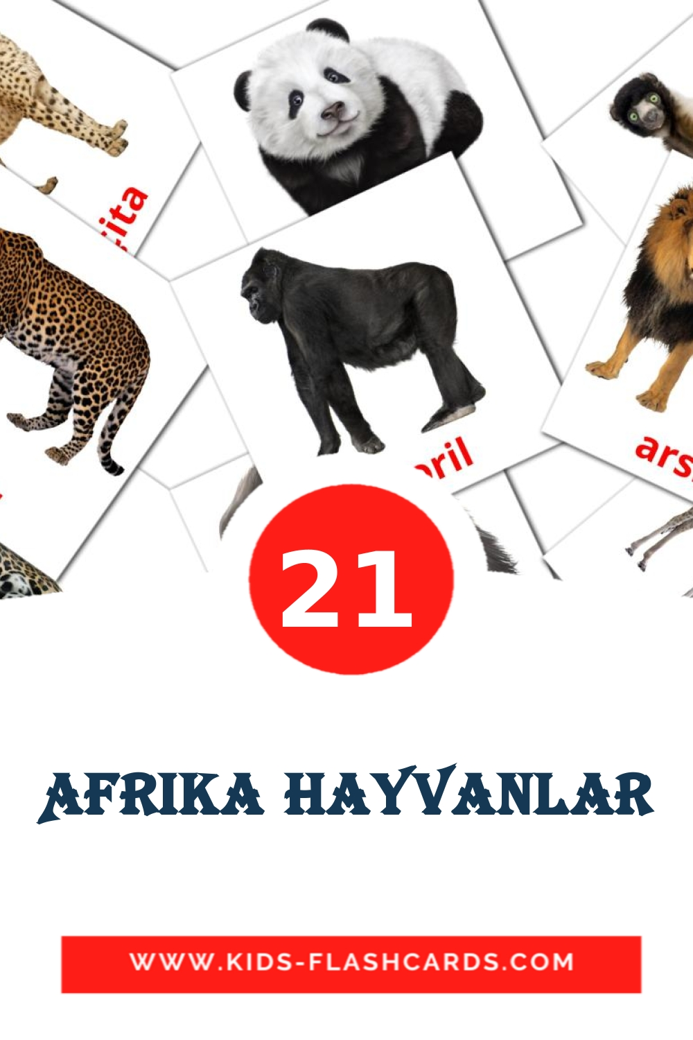 21 Afrika Hayvanlar Picture Cards for Kindergarden in turkish