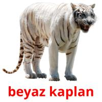 beyaz kaplan picture flashcards