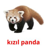 kızıl panda picture flashcards