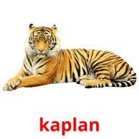 kaplan picture flashcards
