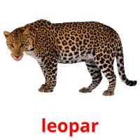 leopar picture flashcards