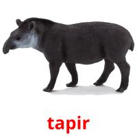 tapir picture flashcards