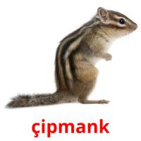 çipmank picture flashcards