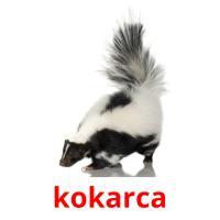 kokarca picture flashcards