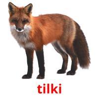 tilki picture flashcards