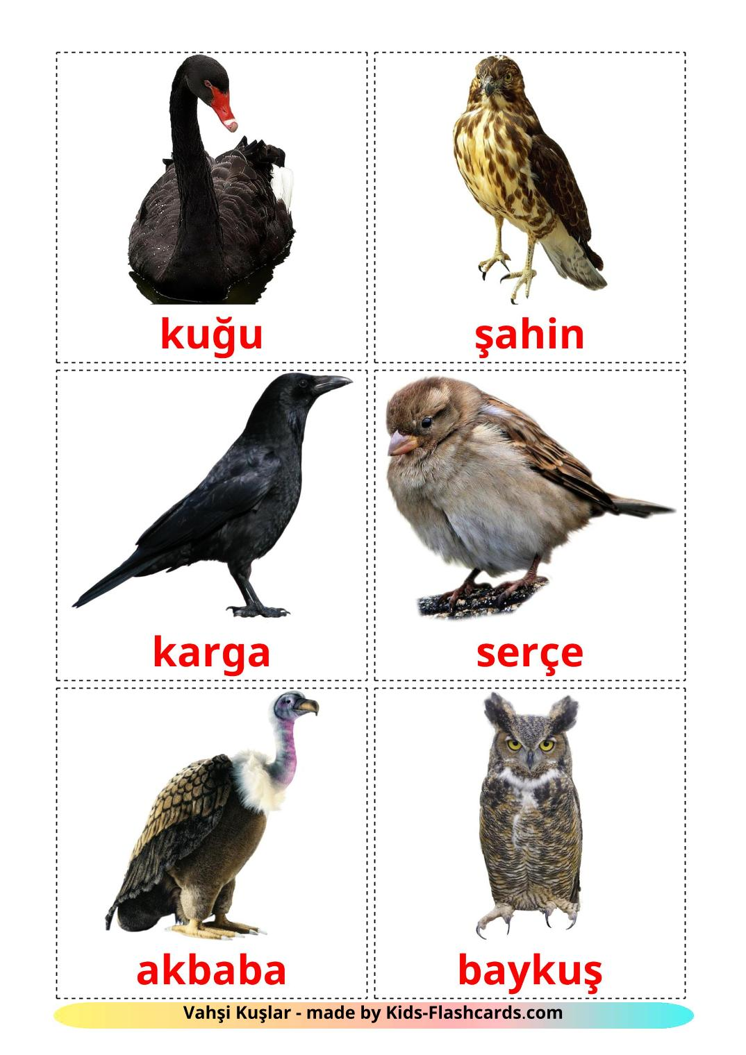 Wild birds - 18 Free Printable turkish Flashcards