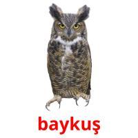 baykuş picture flashcards