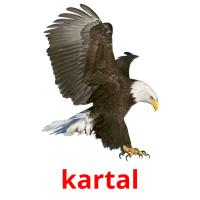 kartal picture flashcards