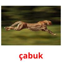 çabuk picture flashcards