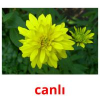 canlı picture flashcards