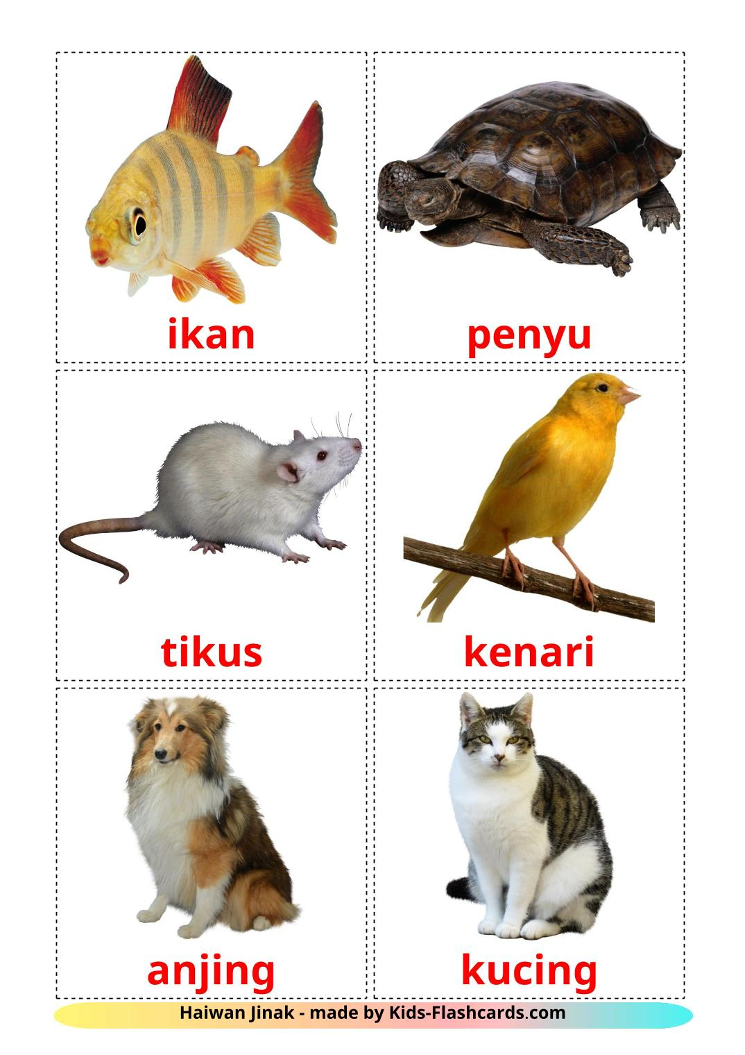 Domestic animals picture cards for Kindergarden in malay