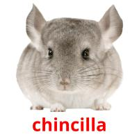 chincilla picture flashcards