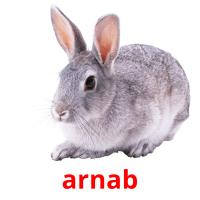 arnab picture flashcards