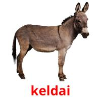 keldai picture flashcards