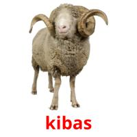 kibas picture flashcards