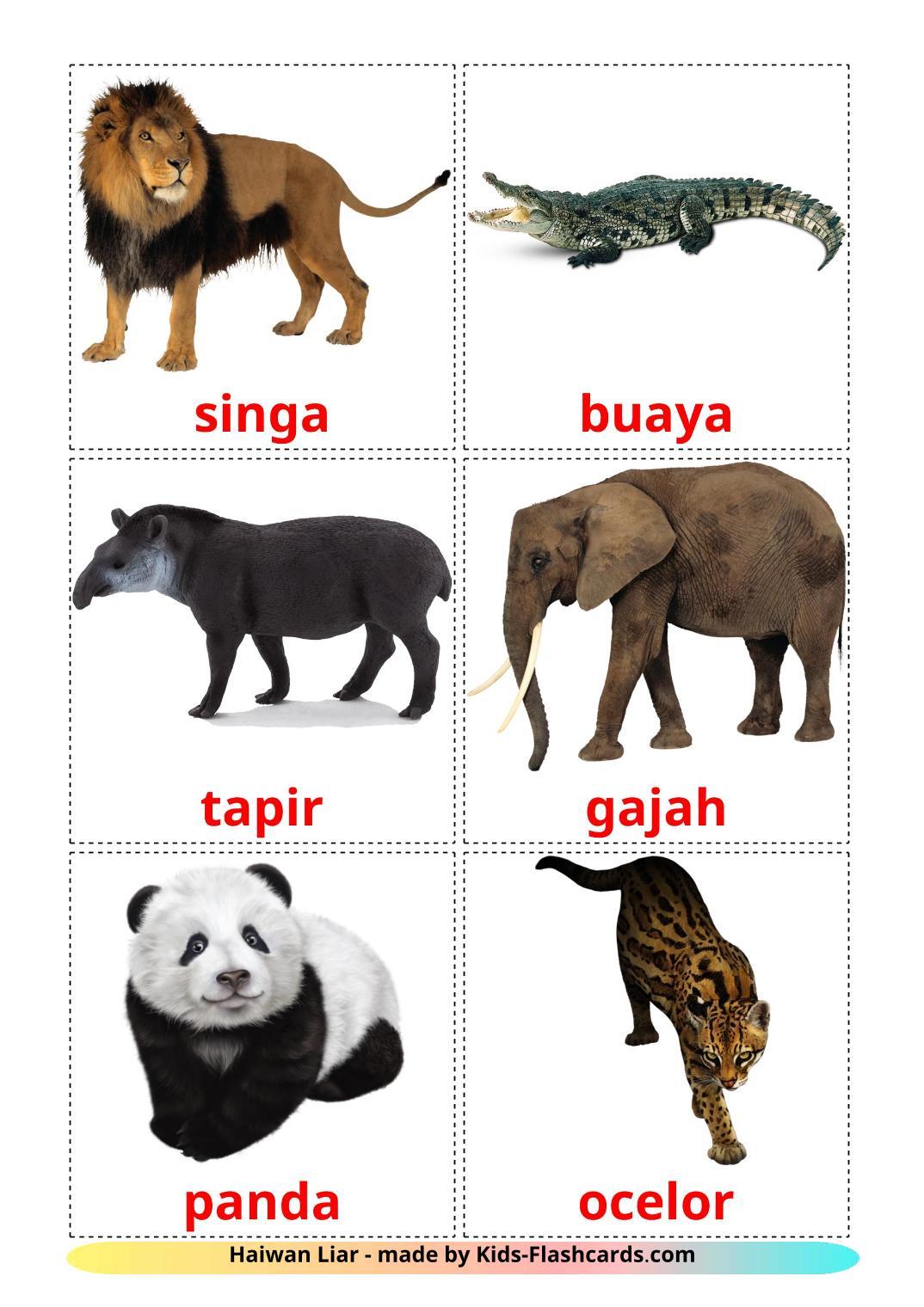 Jungle animals - 21 Free Printable malay Flashcards