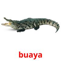 buaya picture flashcards