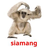 siamang picture flashcards